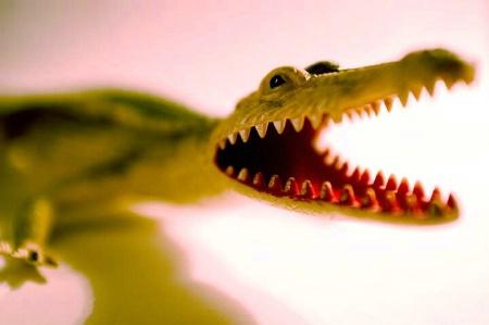 Croc by Liam