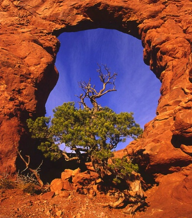 Framed in an Arch