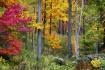 Autumn at Holden ...