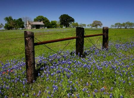 Bluebonnet Prairie