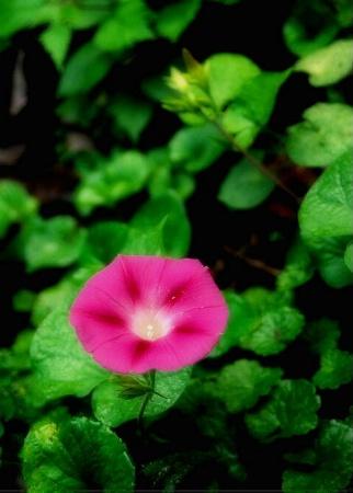 Single Pink Female