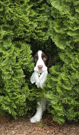 Springer in Hiding