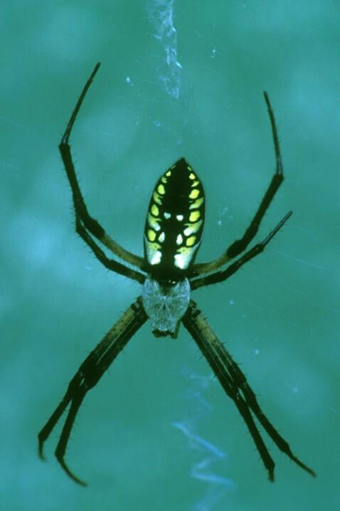 AN-005 Spider #2 - ID: 645138 © Kristina Morgan