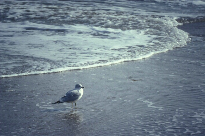 LA-024 Bird on Seashore - ID: 647872 © Kristina Morgan