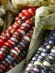 Red corn, blue co...