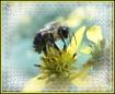Honeycomb/ resubm...