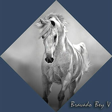 Bravado Bey V - ID: 705825 © Zita A. Strother
