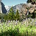 2Yosemite in Spring - ID: 751811 © Zita A. Strother