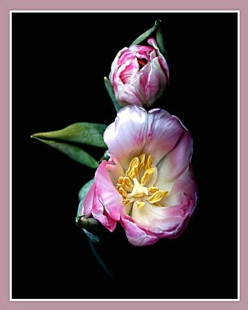 Spring - ID: 800941 © William Greenan