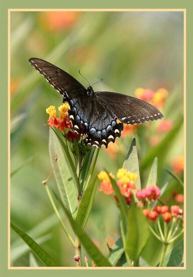 Butterfly6 - ID: 492531 © William Greenan
