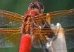 Wing Mechanics