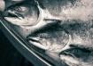 The Three Fish