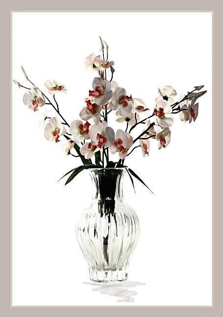 Cherry Blossom - ID: 964698 © William Greenan