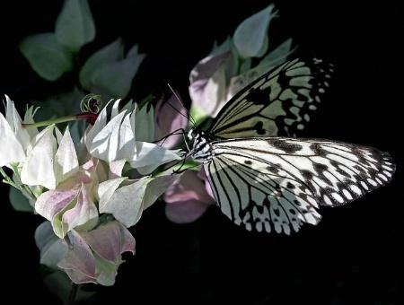 Pretty Paper Kite