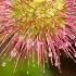 © Jim Miotke PhotoID# 1580437: Bidbidi Plant