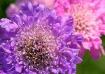 Purple, Pink, Whi...