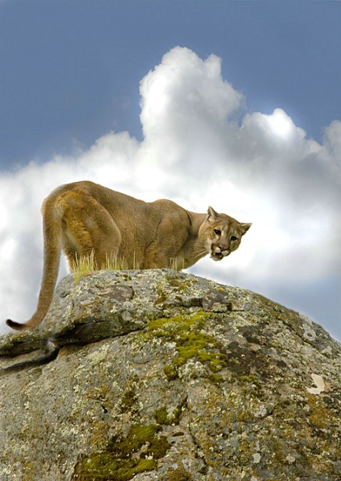 King of the Mountain - ID: 1989930 © Zita A. Strother