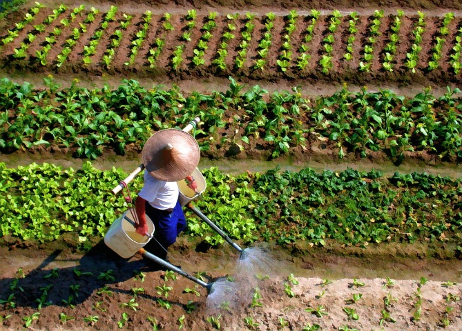 A Farmer in Hong Kong