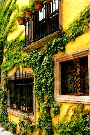 Ivy-Covered Casa