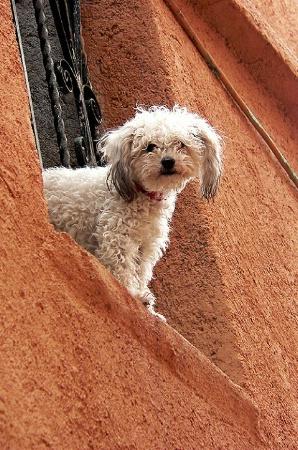 El Perro de Guanajuato