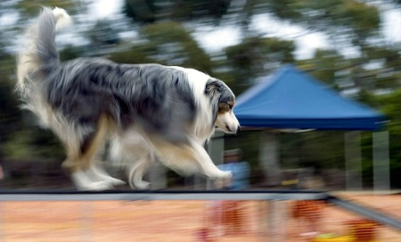 Agility Competitor