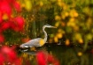 Heron In Autumn