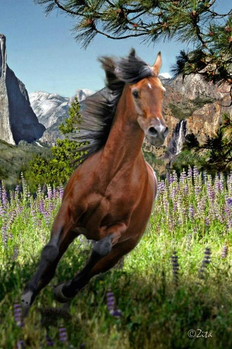 Horsing around in Yosemite - ID: 3550664 © Zita A. Strother