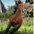 2Horsing around in Yosemite - ID: 3550664 © Zita A. Strother