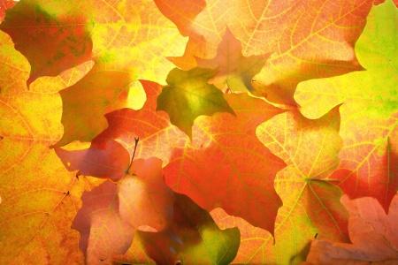 October leaf pattern