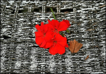 Flower on Wicker, Abstract