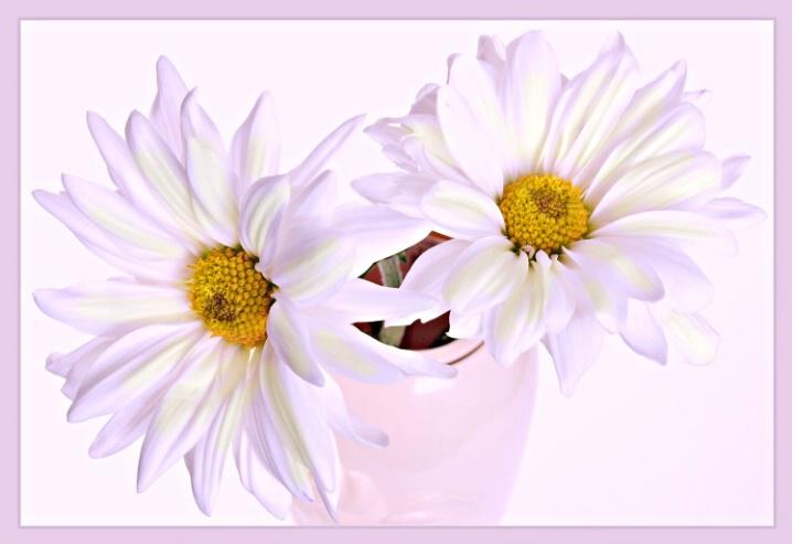 Daisy - ID: 5562949 © William Greenan