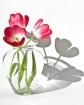 Vase of Shadows