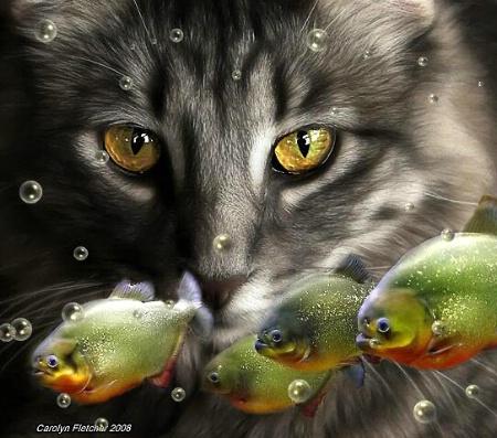 Snap+Fish