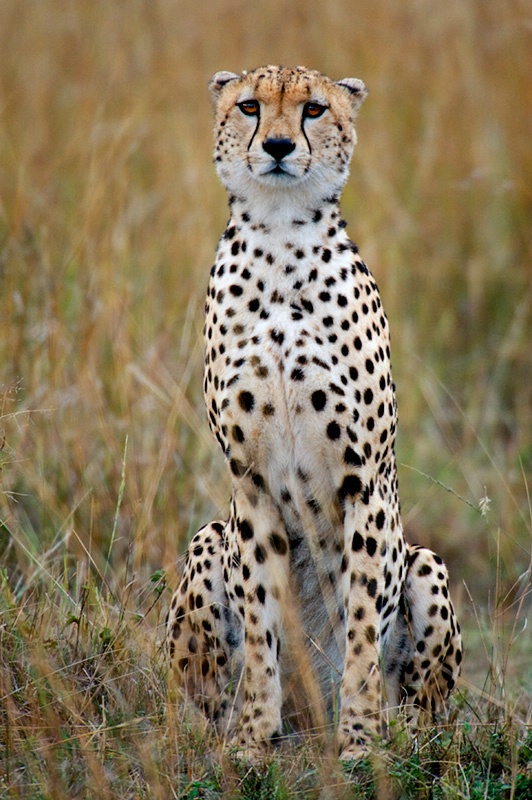 Masai Mara Treasure