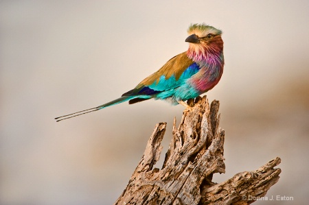 Colorful Beauty