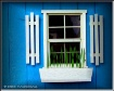 Blue Shed Window