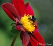 Bee Flowerful and...