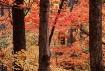Autumn in the Par...
