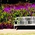 © Karol Grace PhotoID# 9172687: Purple Haze