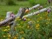 Wildflower Fence
