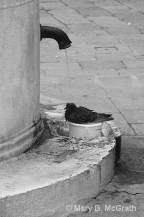Pigeon in the Fountain - ID: 9613462 © Mary B. McGrath