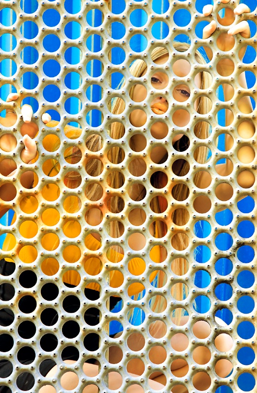 Honey comb & the queen bee