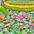 © Anne Marie Hickey PhotoID# 10555478: Water Lilies and Lily Pads