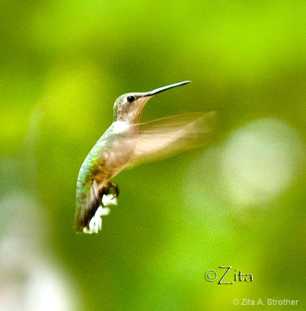 Hover Craft - ID: 10715224 © Zita A. Strother