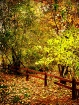 Fall Fenceline