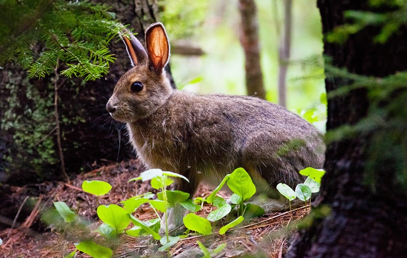 Hare in Wonderland