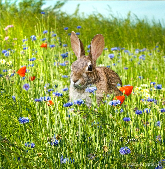 Bunny - ID: 11898116 © Zita A. Strother