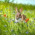 2Bunny - ID: 11898116 © Zita A. Strother