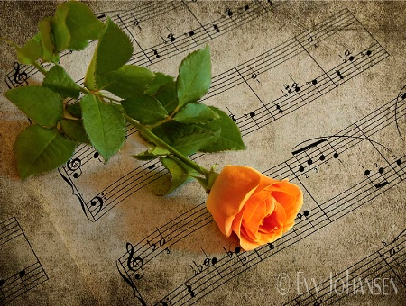 For You a Rose