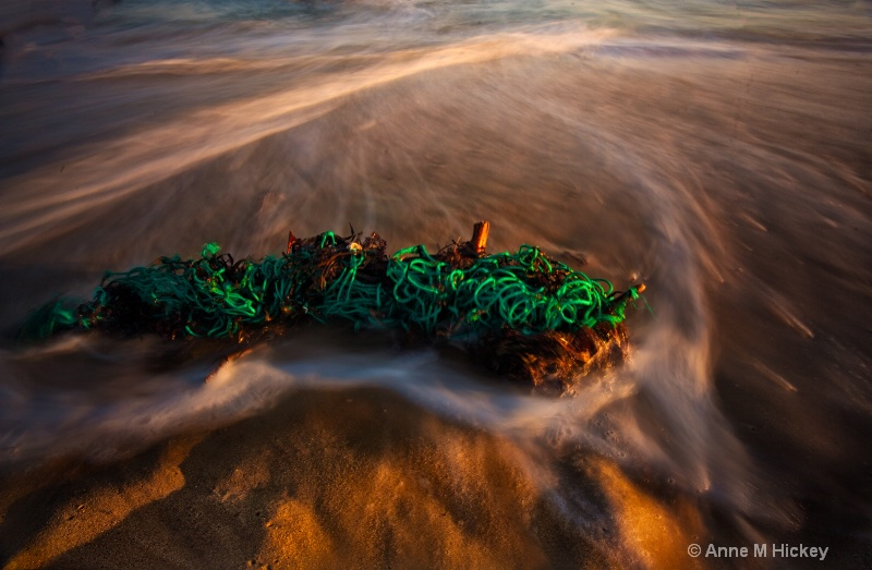 Washed Up - ID: 12388877 © Anne Marie Hickey